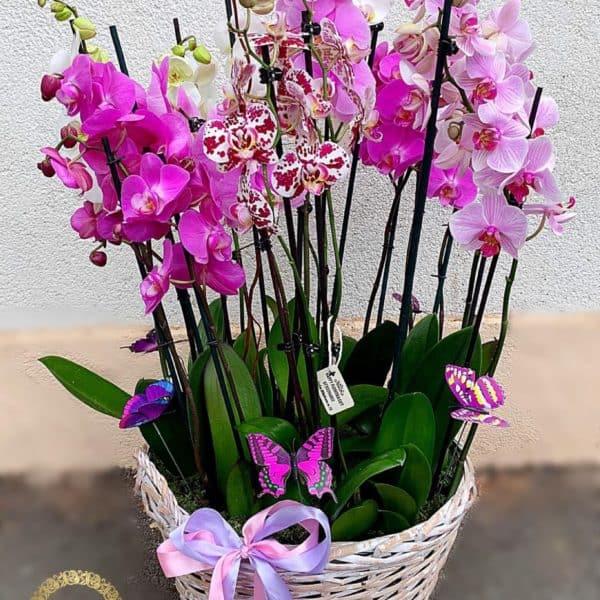 Cos cu Orhidee Ghiveci